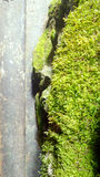 Moss and lichen growth over the stone. Wet rock alway getting theme Stock Photo