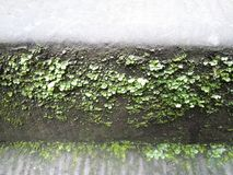 Moss and lichen. On the stone steps Stock Images
