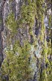Moss and lichen Stock Photography