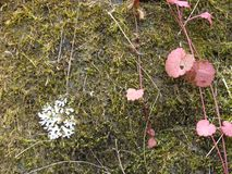 Moss, lichen and red grass leaves. royalty free stock photos