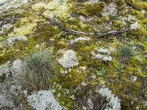 Moss and lichen on a rock Royalty Free Stock Images