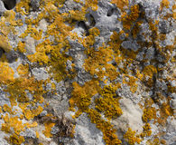 Moss lichen on the rocks orange sandstone. Royalty Free Stock Images