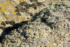 Moss and lichen on a stone Stock Photos