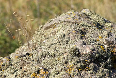 Moss and lichen on a stone Royalty Free Stock Photography