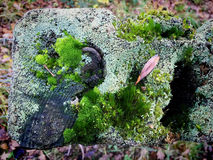 Moss and lichen textures on top of fence post Stock Images
