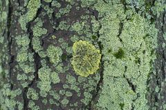 Moss and lichen in different shades of green. Moss and lichens in different shades of green royalty free stock images
