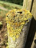 Moss and lichens on a young tree trunk Royalty Free Stock Photos