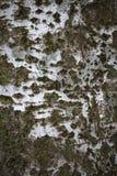Moss on light wood texture