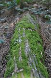Moss on Log Royalty Free Stock Photography