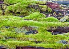 Moss On Log Stock Image