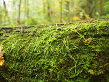 Moss on Log Stock Photo