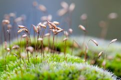Moss Macro Photographie stock