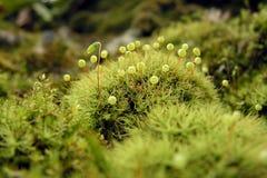 Moss macro Stock Image