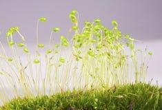 Moss in Macro stock photos