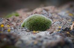 Moss Macro Imagen de archivo