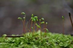 Moss Macro Foto de Stock