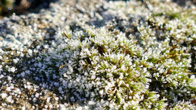 Moss macro background Royalty Free Stock Photos