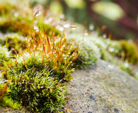 Moss macro look Royalty Free Stock Image