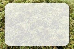 Moss Macro Photo com a caixa arredondada branco para o texto da cópia em insetos imagens de stock