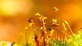 Moss macro photography royalty free stock image