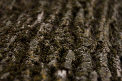 Moss on maple tree Stock Images