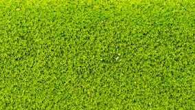 Moss Massively royaltyfria foton