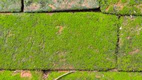 Moss Massively royaltyfri fotografi