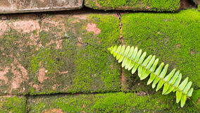 Moss Massively. On The Bricks royalty free stock images
