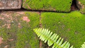 Moss Massively. On The Bricks royalty free stock image