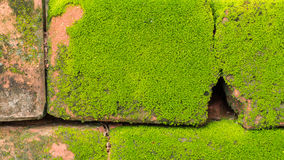 Moss Massively. On The Bricks stock images