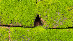 Moss Massively. On The Bricks Stock Photo