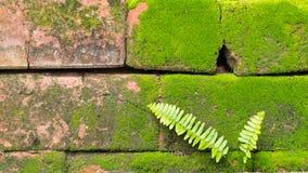 Moss Massively. On The Bricks Stock Image