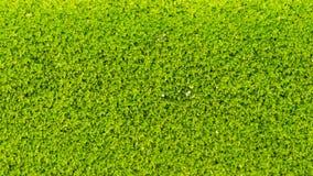 Moss Massively. On The Bricks royalty free stock photos