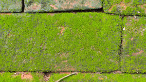 Moss Massively. On The Bricks Royalty Free Stock Photography