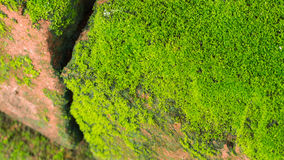 Moss Massively. On The Bricks stock photos
