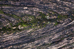 Moss And Mold Affect a Wood Board Royalty Free Stock Image