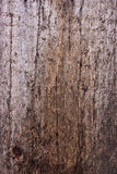 Moss and mold affect a wooden planks. Stock Photo