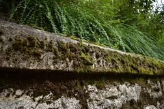 Moss. On the wall Royalty Free Stock Image