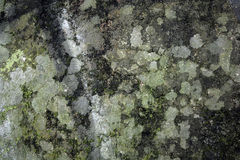 Moss and mould wall textures Royalty Free Stock Images