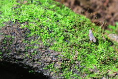 Moss. On the mountain Thailand Royalty Free Stock Photos
