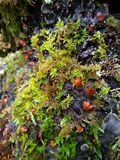 Moss and mushroom macro in forest background stock photos