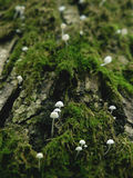 Moss and mushrooms Stock Photography