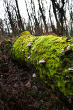 Moss and mushrooms on rotting tree Stock Photos