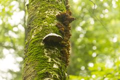 Moss Mushrooms Tree Trunk Immagine Stock