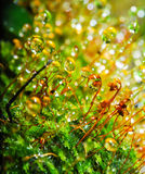 Moss on natural Stock Photography