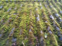 Moss. Nature, bokeh, greens, roof, mold, old Stock Photo