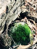 Moss. New York Nature Royalty Free Stock Image