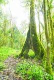 moss objętych drzewny trunk Fotografia Stock