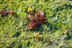 Moss och eremitkrabbor Royaltyfria Foton