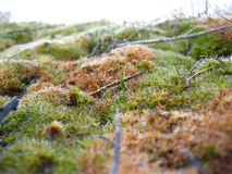 Moss och gräs Arkivbilder
